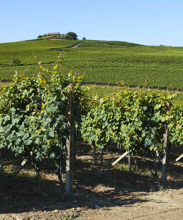 Ceretti Wines, vini piemontesi del Monferrato 6